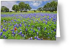 Texas Spring  Greeting Card