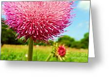 Texas Thistle 003 Greeting Card