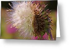 Texas Thistle 004 Greeting Card