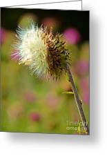 Texas Thistle 005 Greeting Card