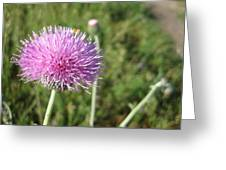 Texas Thistle Greeting Card