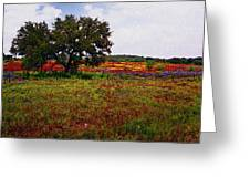 Texas Wildflowers Greeting Card by Tamyra Ayles