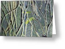 Texture Study One   Entanglement Greeting Card