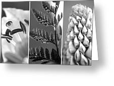 Texture Triptych Greeting Card