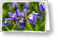 Textured Bearded Irises Greeting Card
