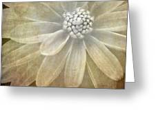 Textured Dahlia Greeting Card
