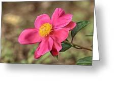 Textured Pink Peony Greeting Card