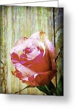 Textured Pink Red Rose Greeting Card