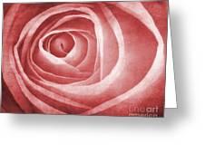 Textured Rose Macro Greeting Card by Meirion Matthias