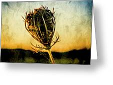 Textured Seedhead. Greeting Card