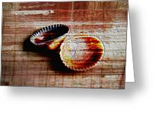 Textured Shells Greeting Card