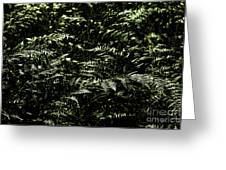 Textures Of A Rainforest Greeting Card