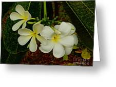 Thai Flowers II Greeting Card