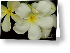 Thai Flowers IIi Greeting Card