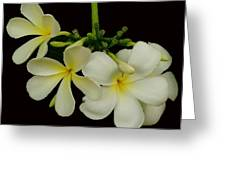 Thai Flowers Greeting Card