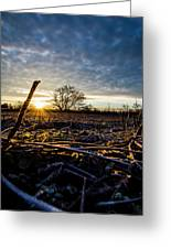 Thanksgiving Sunrise Greeting Card
