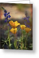 That Golden Poppy Glow  Greeting Card