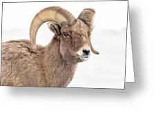 That Handsome Ram Greeting Card