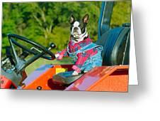 That Is One Hard Workin' Farm Dog Greeting Card