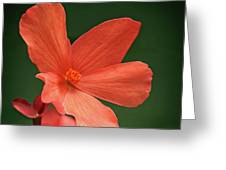 That Orange Flower Greeting Card