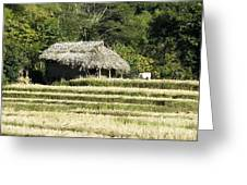 Thatched Shelter Greeting Card