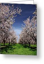 The Almond Bloom Greeting Card