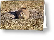 The Amazing Black-tailed Prairie Dog Greeting Card