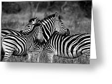 The Amazing Shot Of Zebra Greeting Card