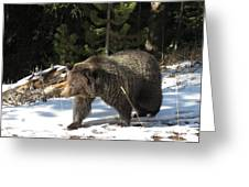 The American Grizzly Greeting Card