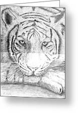 The Amur Tiger Greeting Card