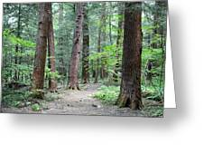 The Ancient Hemlock Forest Greeting Card