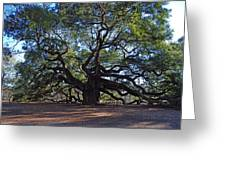 The Angel Oak In Spring Greeting Card