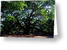 The Angel Oak In Summer Greeting Card