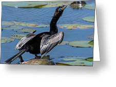 The Bird, Anhinga Greeting Card by Cindy Lark Hartman