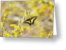 the Anise Swallowtail  feeding in the trees Greeting Card