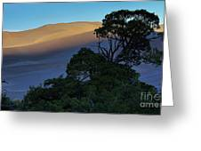 The Anthill Greeting Card