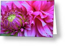 The Anticipation Of Dahlia 3 Greeting Card
