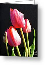 The Appearance Of Spring - Tulips Greeting Card