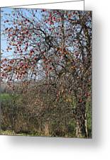 The Apple Tree Greeting Card by Danielle Allard