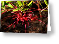 The Art Of Spider Flower Greeting Card