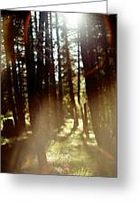 The Art Of The Forest Greeting Card