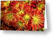 Chrysanthemum Bouquet Greeting Card