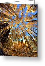 The Aspens Above - Colorful Colorado - Fall Greeting Card