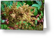 The Astible After The Bloom Greeting Card