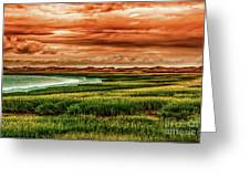 The Atlantic White Cedar Swamp Trail Greeting Card