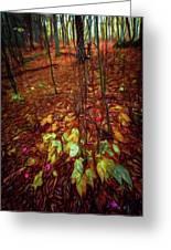 Autumn V6 Greeting Card