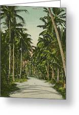 The Avenue Of Palms Guam Li Greeting Card