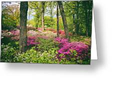 The Azalea Woodland Greeting Card
