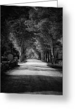 The Backroad Greeting Card