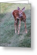 The Bambi Stance Greeting Card